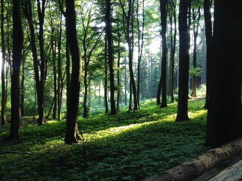 Hardlopen Hermannsweg Teutoburger Wald